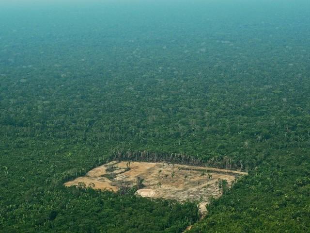 Brasiliens Amazonas: 7900 Quadratkilometer Regenwald binnen einem Jahr abgeholzt