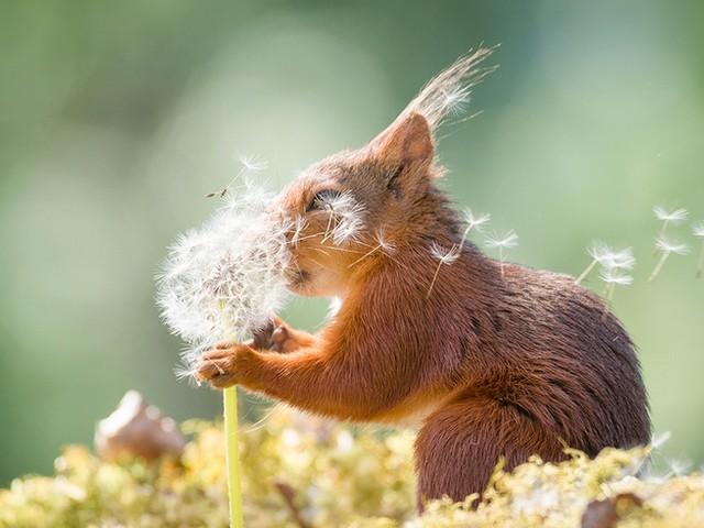 Tierisch witzig: Diese Tier-Fotos bringen euch garantiert zum Lachen