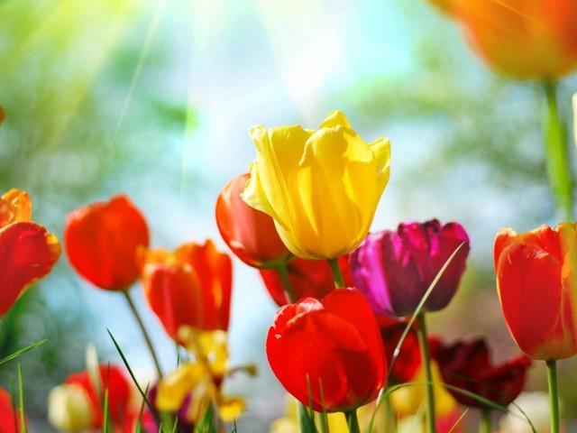 Mitten im Frühling: Hier ist die volle Blüte weiter voraus