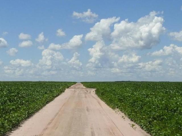 Soja-Anbau im Amazonas binnen weniger Jahre vervielfacht