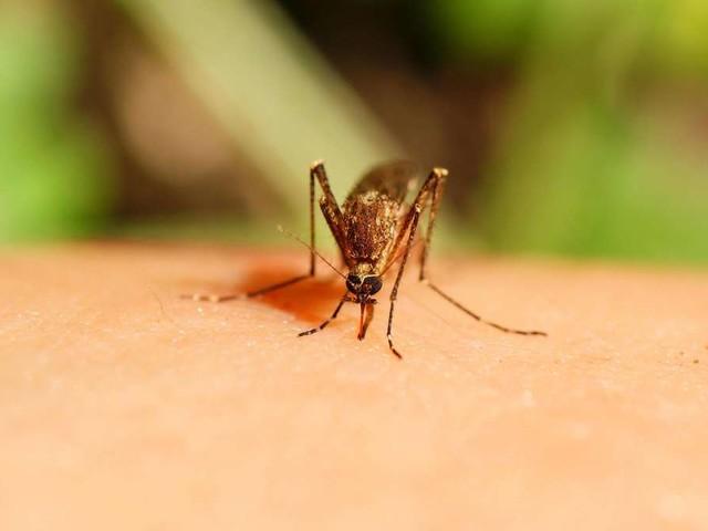 Mücken vertreiben: Diese Möglichkeiten helfen gegen die Plagegeister
