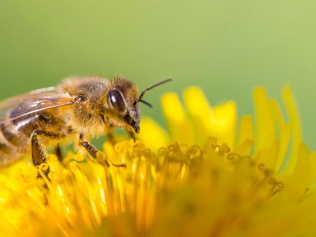 """Für mehr Artenschutz - Rekord: """"Rettet die Bienen"""" ist erfolgreichstes Volksbegehren Bayerns"""