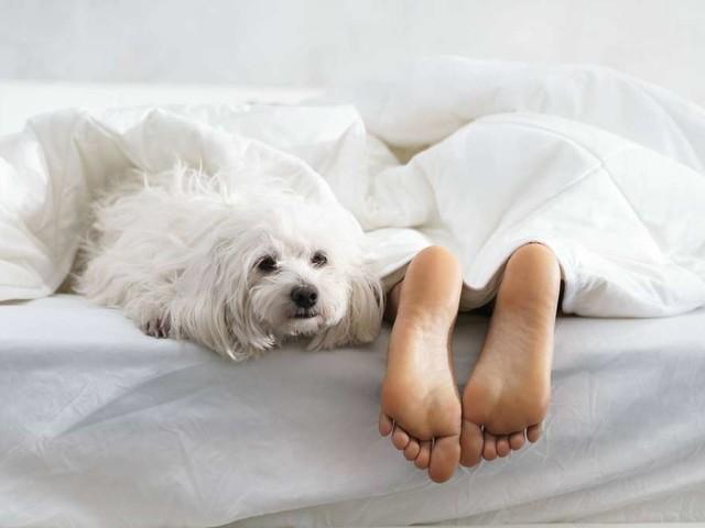 """REM-Schlaf """"räumt das Gehirn auf""""?– Das passiert, wenn der Körper ruht"""