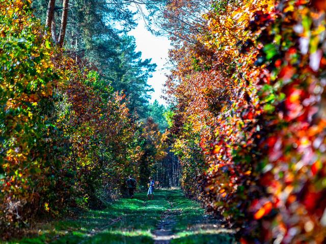 Herbst Am Niederrhein So Schon Leuchten Die Walder Von Xanten Bis