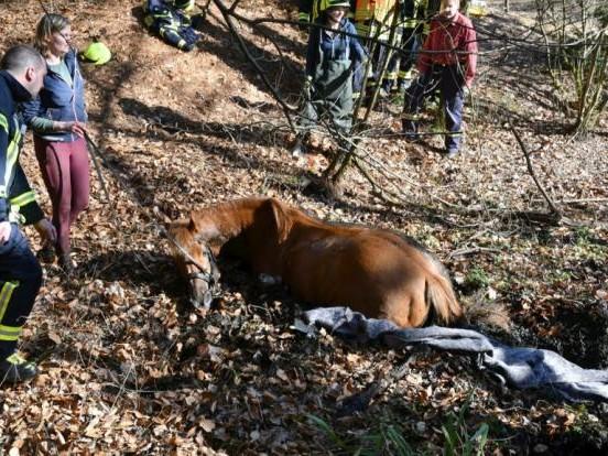 Pferd versinkt in Tümpel - und führt Polizei so zu Waffen im Matsch