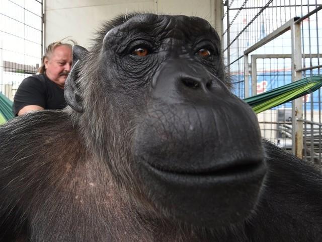 """Prozess um Affen Robby: """"Ich freue mich, dass ich mein Kind behalten kann"""""""