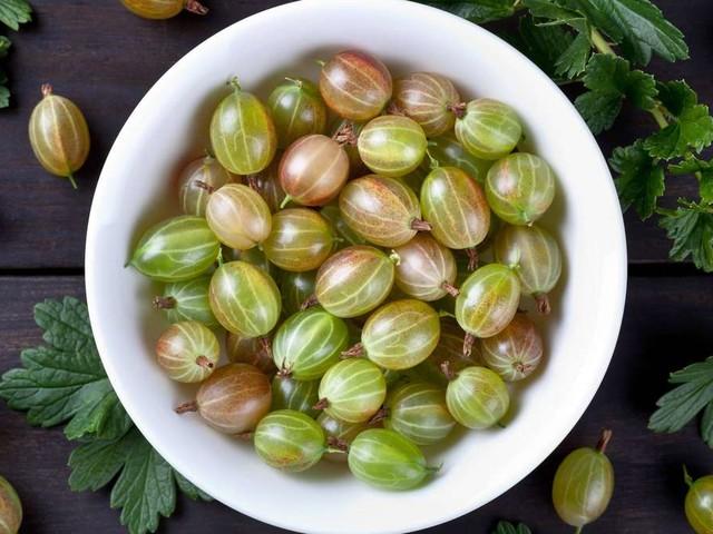 Stachelbeeren ernten: Ab wann die leckeren Früchte genießbar sind