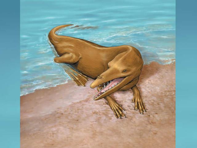 Forscher entdecken Fossilien, die beweisen, dass Wale früher an Land gehen konnten