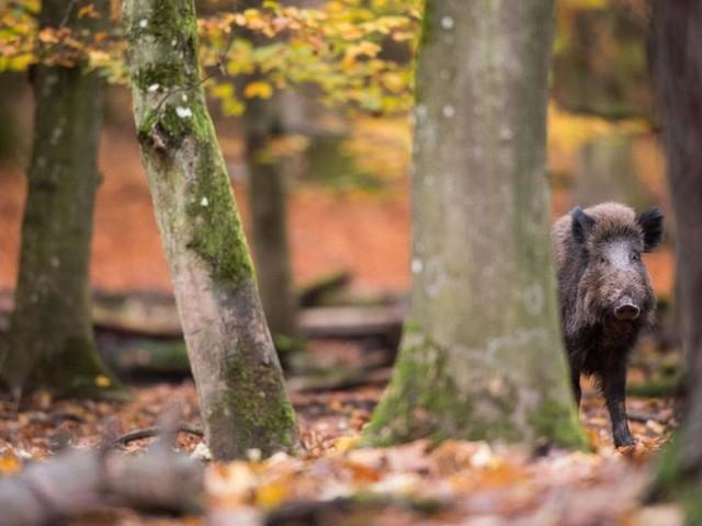 Der Wald gerät immer stärker unter Druck