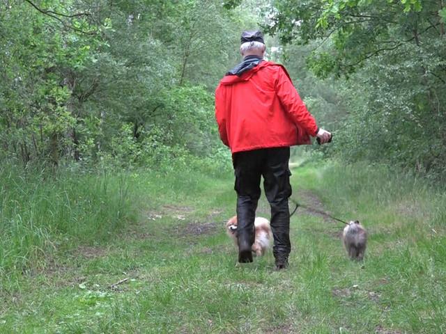 Todeskampf im Moor: Mann will Hund retten - dann kommt es zum Drama