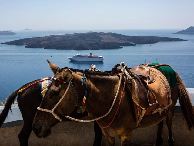 Esel müssen auf Santorin keine übergewichtigen Touristen mehr tragen