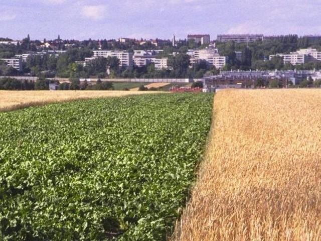 Die Wiener Stadtlandwirte sind in Bedrängnis