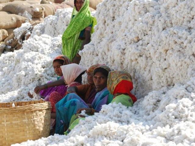 Sustainable Cotton Ranking 2017: einige Vorreiter, viele Nicht-Starter