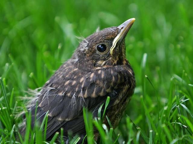 Junge Wildtiere gefunden: Meist brauchen sie keine Hilfe