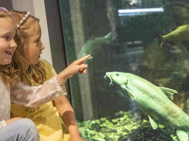 Sommer im Museum Niederösterreich: Volles Programm für Familien