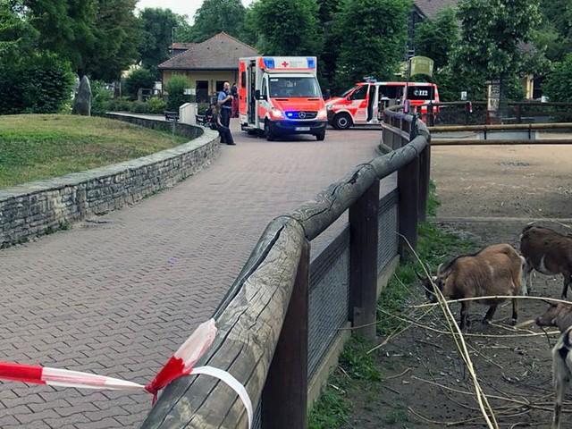 """""""Tragischer Unfall ohne Schuldigen"""": Ermittlungen zu im Zoo ertrunkenem Jungen eingestellt"""