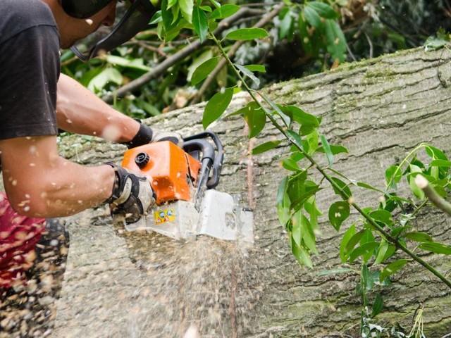 71-Jähriger bei Forstarbeiten in Kärnten tödlich verunglückt