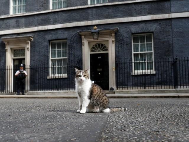 Tory-Wahlkampf in Großbritannien: Chefkatze sucht neuen Mitbewohner