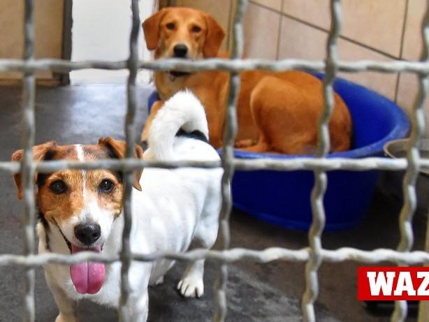 Tiere: Corona: Tierheime fürchten Zustrom von Haustieren Erkrankter