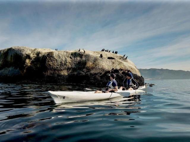 Urlaub für Naturfreunde: Seebären und balzende Strauße: Kapstadts wilde Seite
