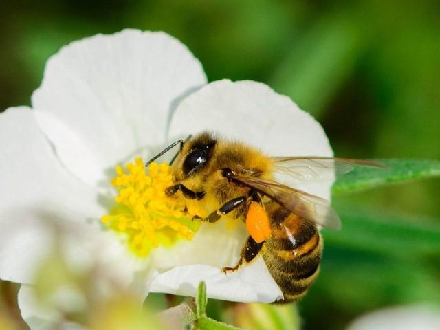 Digitale Naturbeobachtung: Schulen und Kitas können sich um High-Tech-Bienenstöcke bewerben