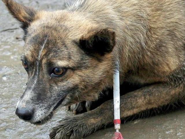 Brutale Tötung von Straßenhunden - Tausende Hunde müssen für die Fussball-Weltmeisterschaft auf grausame Weise sterben