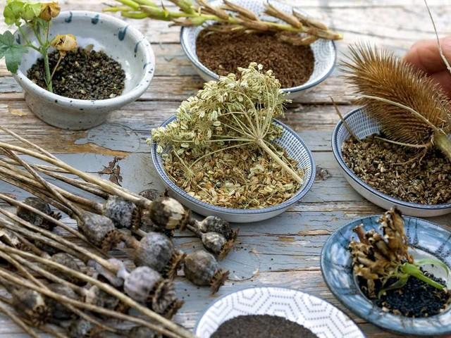 Saatgut tauschen und kaufen: An diesen Stellen ist Vorsicht geboten