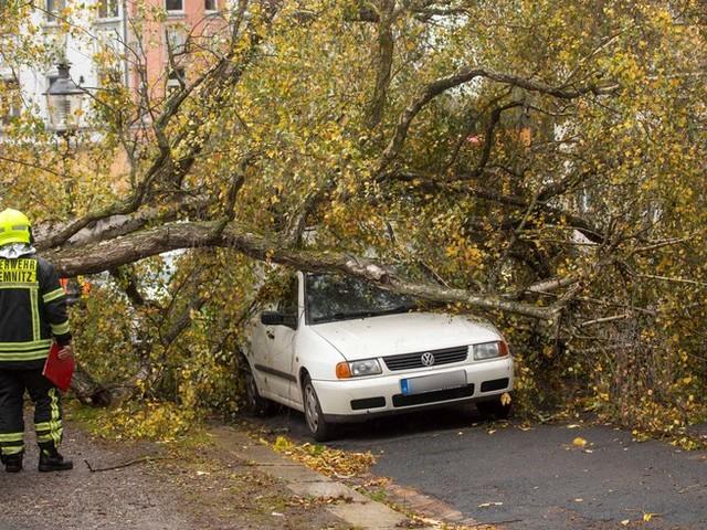 Sturm Ignatz fegt über Deutschland: Baum fällt im Sturm auf fahrendes Auto – Fahrer schwer verletzt