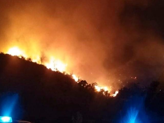 Algerien: Mindestens vier Tote bei Waldbränden