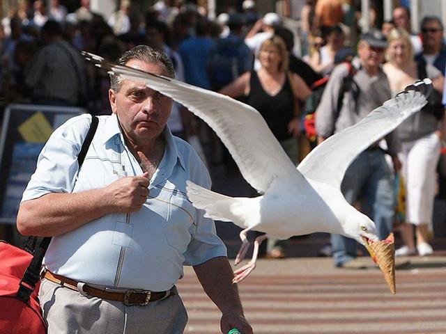 Top 10 der bösen Möwen, die Essen klauen // Top 10 Evil Seagulls Stealing Food