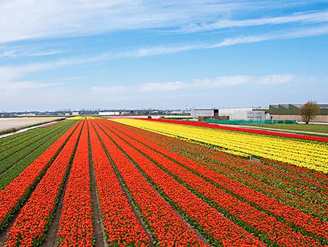 Tulpen-Wanderung beim Kasteel Keukenhof