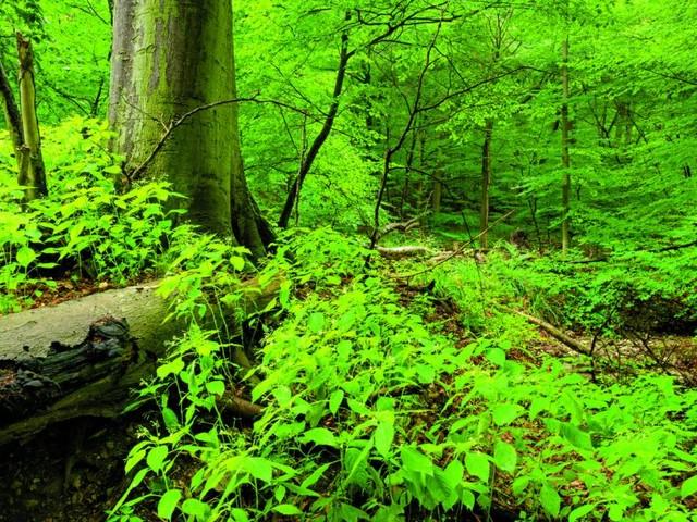 Geheimes Grün: Die schönsten heimischen Zauberwälder