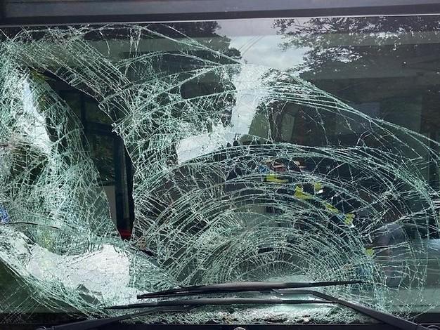 Unfall in der Pfalz: Hirsch kracht in Linienbus und verlässt ihn durch Hintertür