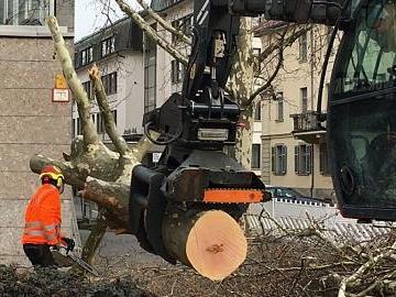 Bäume vor dem Mainfranken Theater gefällt