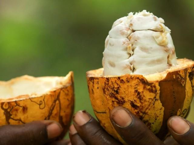 Schokolade: Wer am Weltmarkt das Sagen hat