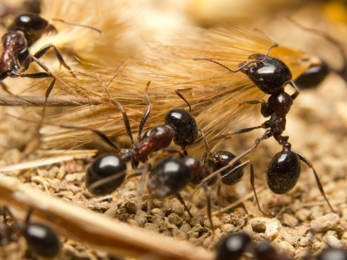 Forschung: Der Verzehr von Ameisen und anderen Insekten schützt uns vor Krebs