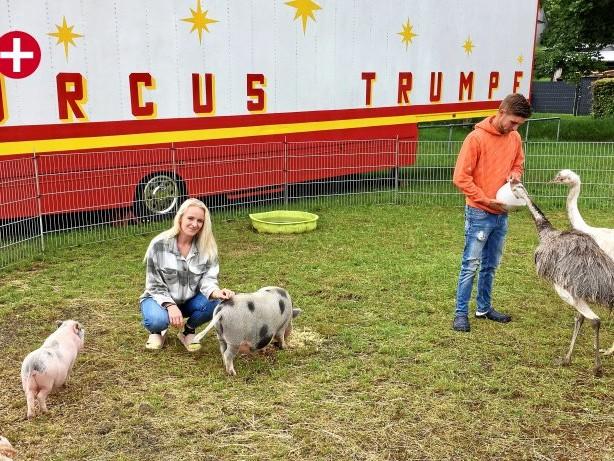 Zirkus: Circus Trumpf in Wenden: Der harte Kampf ums Überleben