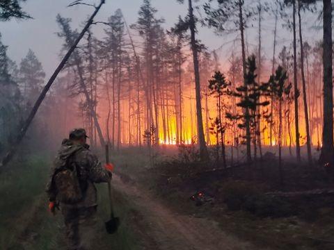Umweltschützer:Waldbrände inRussland - historisches Ausmaß