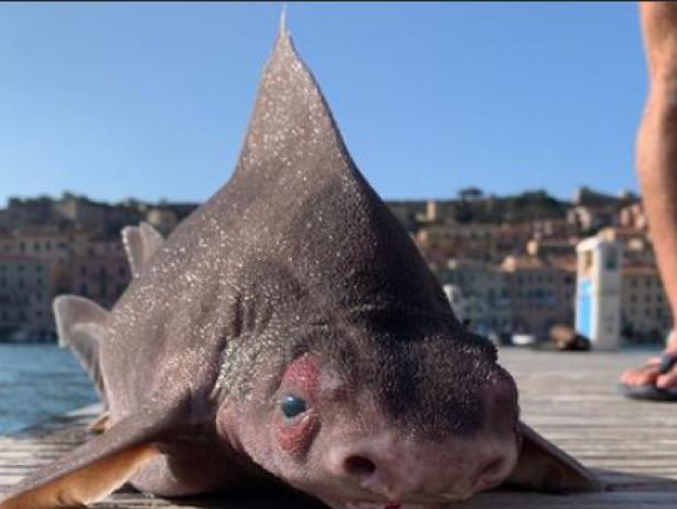 Meerestiere: Italien: Mysteriöses Tier am Strand gefunden - Netz rätselt