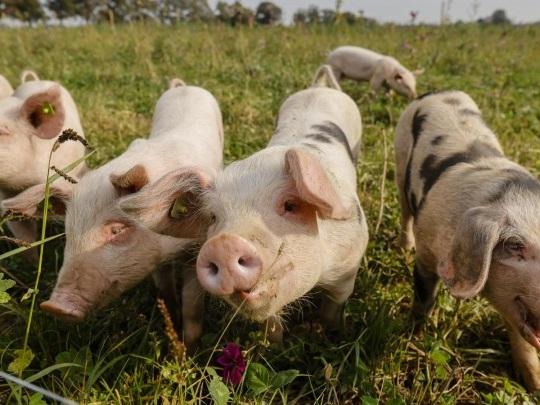 Landwirtschaft - Deutlich mehr Öko-Bauern in Deutschland