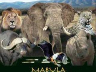 Dyrebeskyttelsesaktivister koster masser af dyreliv