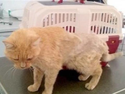 Bordeaux: Elle retrouve son chat disparu onze ans plus tôt