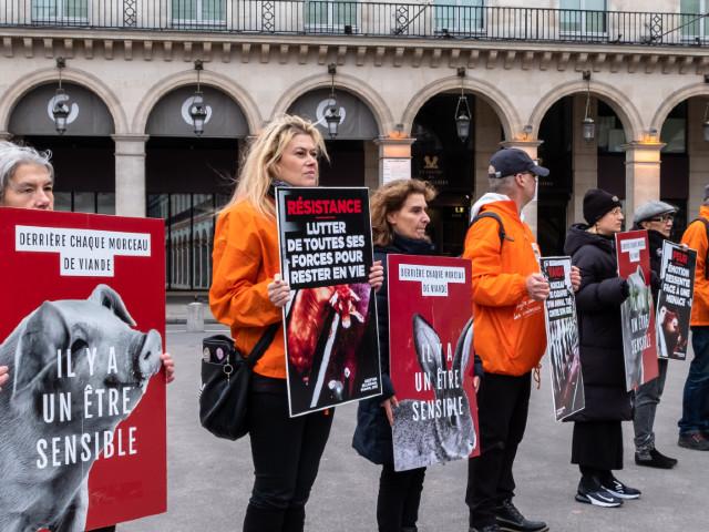 Chasse, élevage, cirque : le bien-être animal, enjeu électoral pour 2022