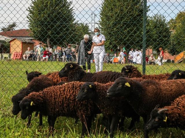 Ecopâturage en Lot-et-Garonne: des moutons, nouveaux voisins des résidents de l'Ehpad de Pompeyrie