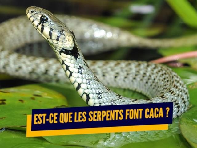Top 10 des réponses aux questions qu'on se pose sur les serpents, tu es un serpent Harry