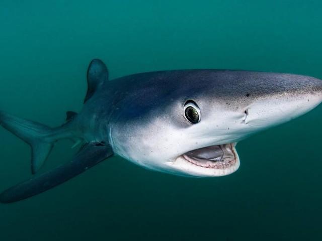 Une plage française évacuée à cause de la présence d'un requin