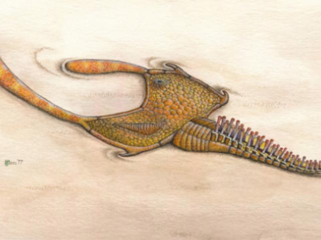 Une mystérieuse créature vieille de 480 millions d'années enfin identifiée grâce à ses tripes retrouvées au Maroc