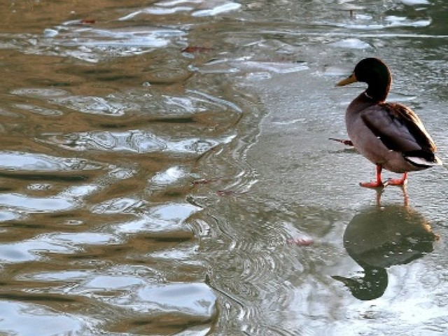 """L'eau des rivières dans un état """"calamiteux"""" (UFC-Que Choisir)"""