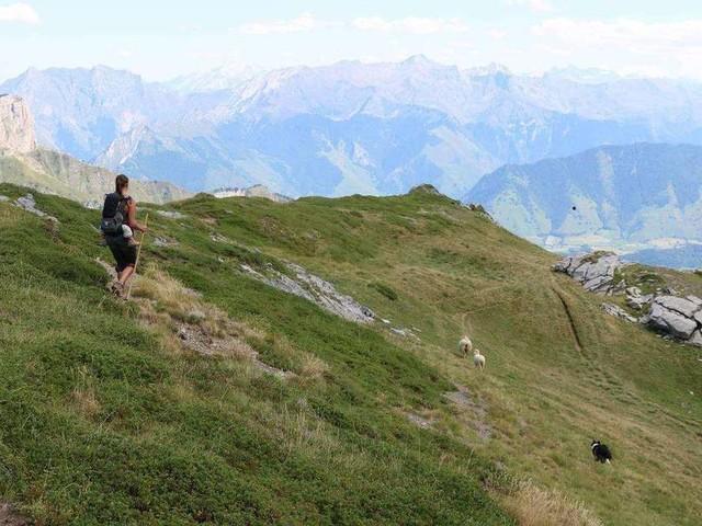 L'Édition du soir – 24 h avec une bergère et son fils en estive à 1 700 mètres d'altitude