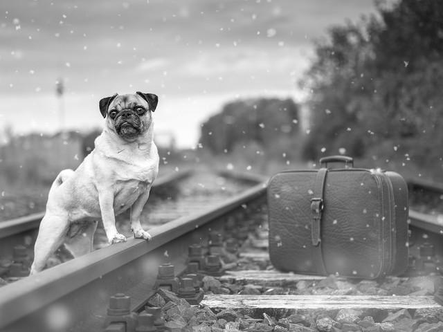 Astuces pour voyager en train avec des animaux de compagnie